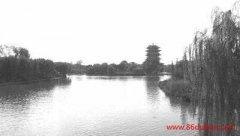 王化清:大明湖畔联花香